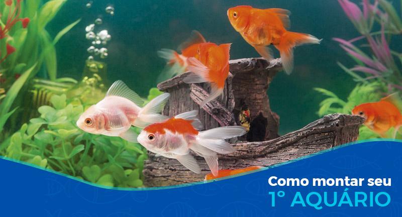 Como montar meu primeiro aquário
