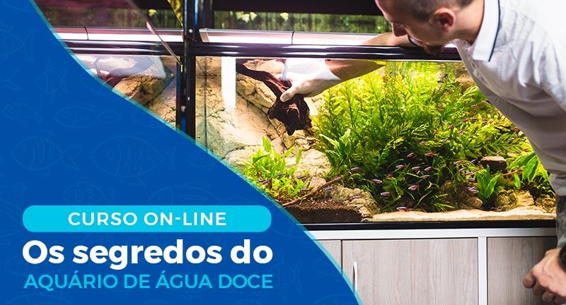 curso de aquarismo online