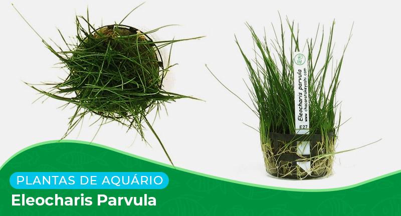 Ficha técnica: Planta Eleocharis parvula