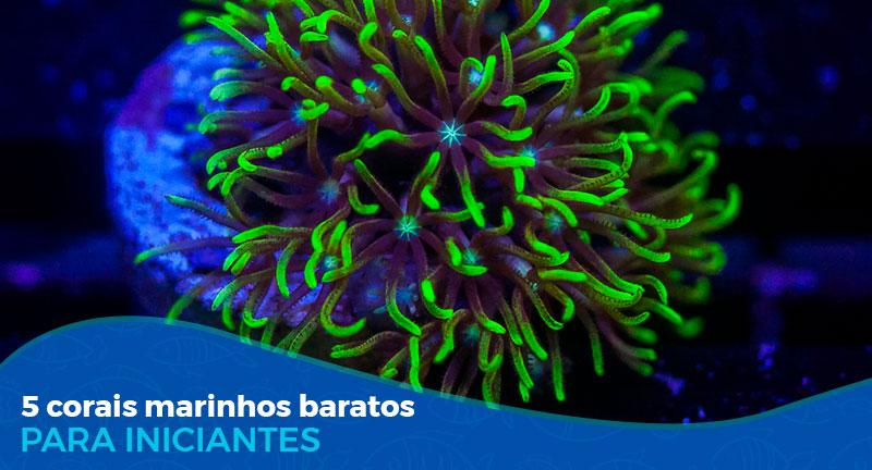 5 Corais Soft marinhos baratos para iniciantes