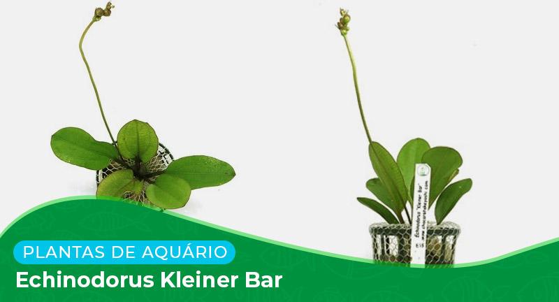 Ficha técnica: Planta Echinodorus kleiner bar