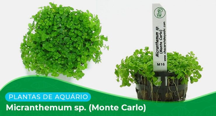 Ficha técnica: Micranthemum sp. (Monte Carlo)