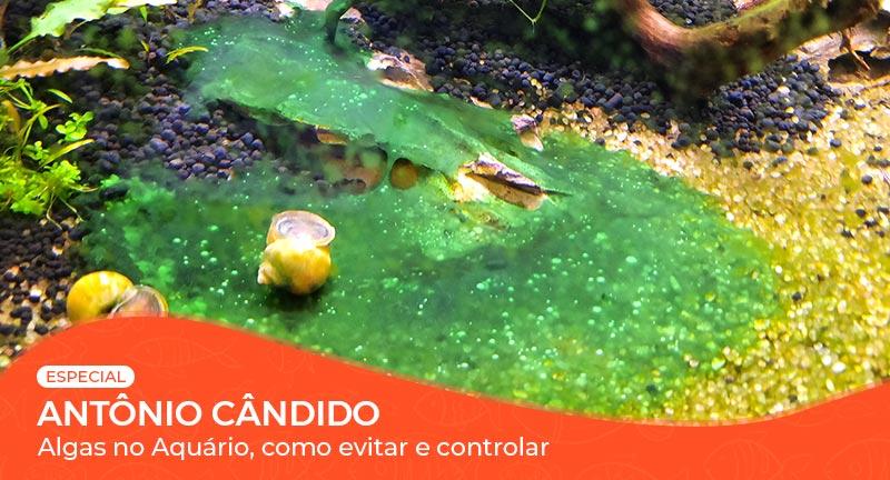 Vídeo: Algas no aquário: como evitar e controlar?