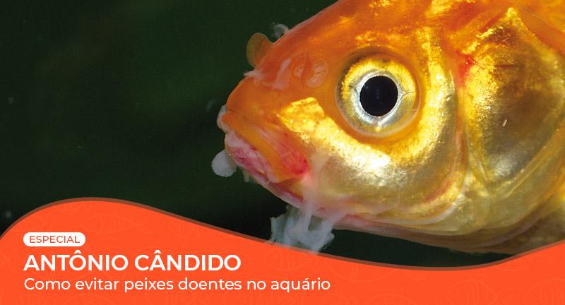 Vídeo: Como evitar peixes doentes no aquário?