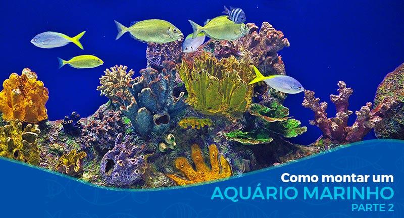 Como montar um aquário marinho - Parte 2/2