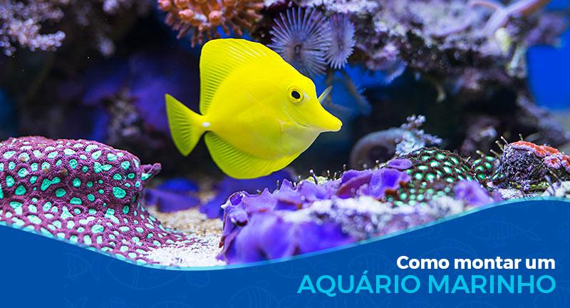 Como montar um aquário marinho - Parte 1/2