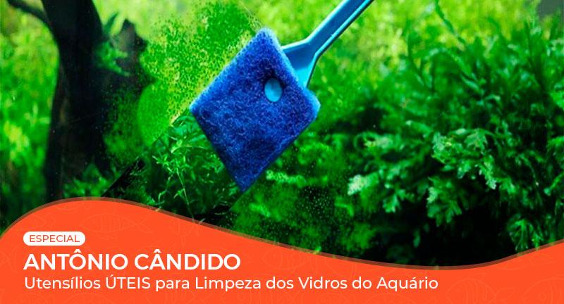 Vídeo: Utensílios úteis para limpeza dos vidros do Aquário