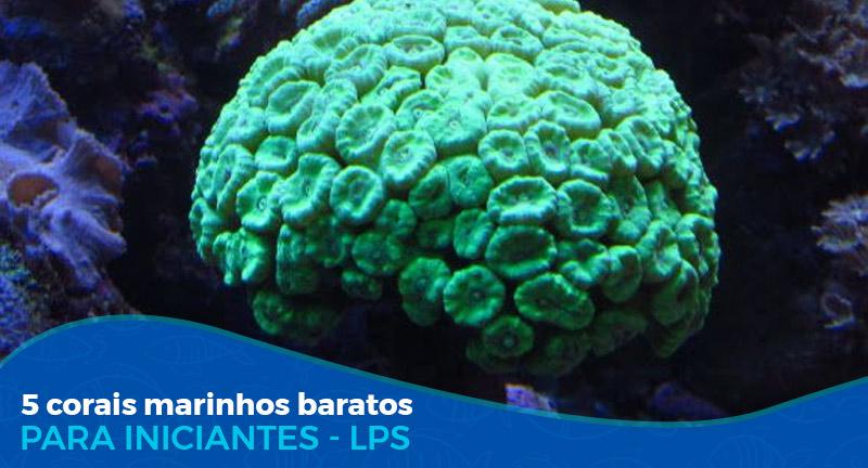 5 Corais Marinhos baratos LPS (para iniciantes)