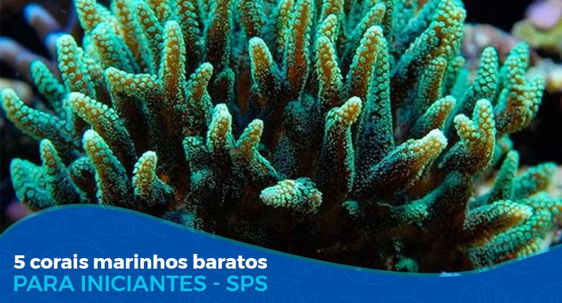 5 Corais Marinhos baratos SPS (para iniciantes)