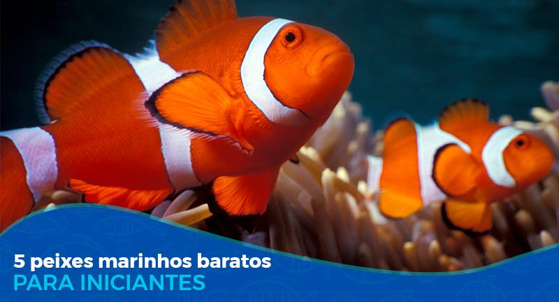5 Peixes marinhos baratos para aquarista iniciante
