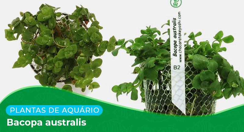 Ficha técnica: Bacopa australis