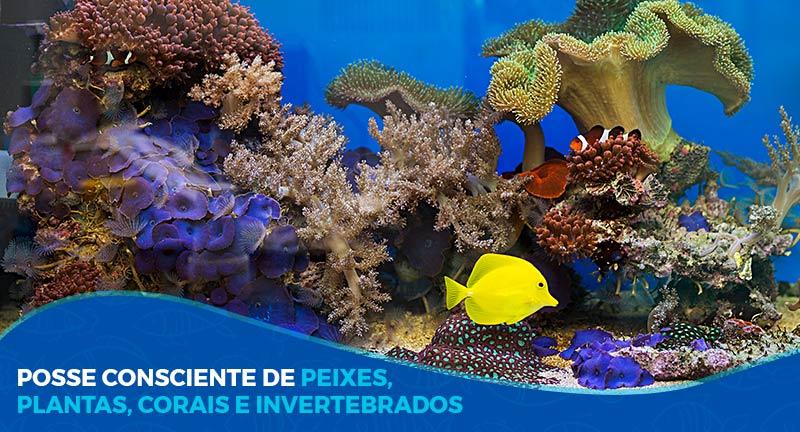 Posse consciente de peixes, plantas, corais e invertebrados