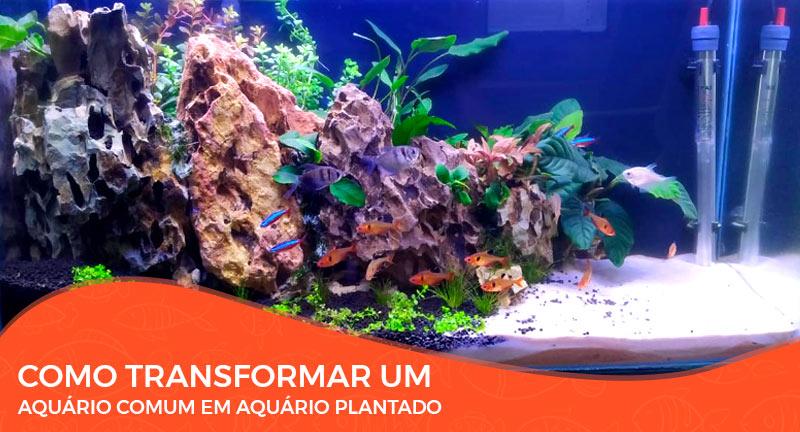 Aula: Como Transformar Um Aquário Comum em Aquário Plantado