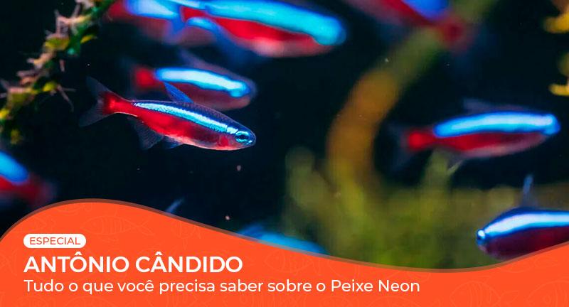 Vídeo: Tudo o que você precisa saber sobre o Peixe Neon