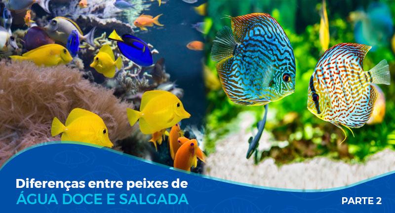 Diferenças entre peixes de água doce e salgada – Parte 2/2