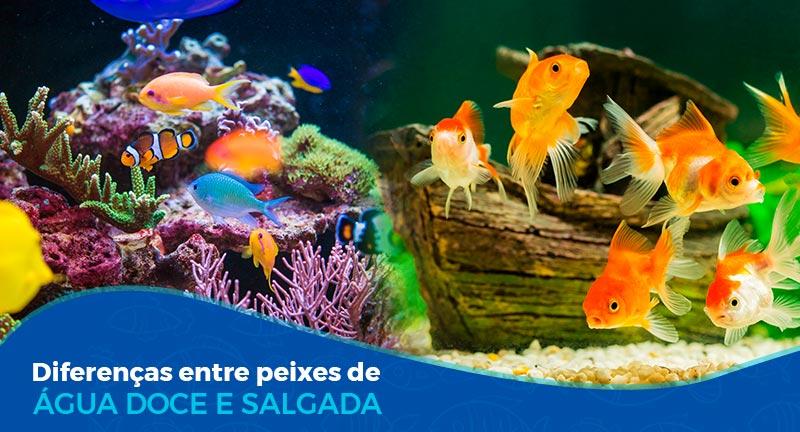 Diferenças entre peixes de água doce e salgada