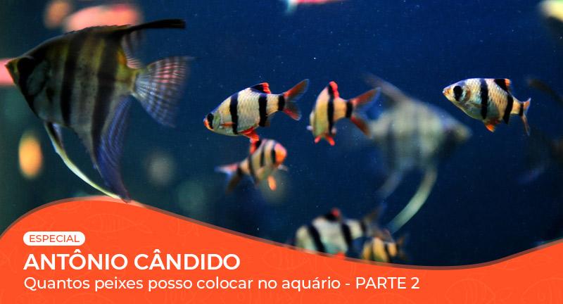 Vídeo: Quantos peixes posso colocar no aquário? - Parte 2/2