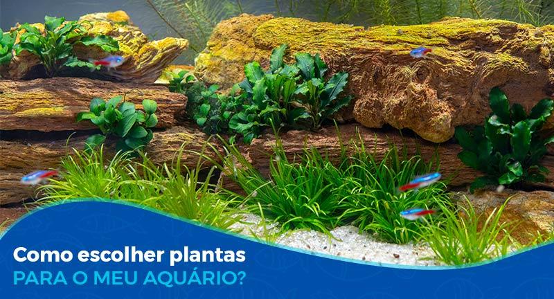 Como escolher plantas para meu aquário?