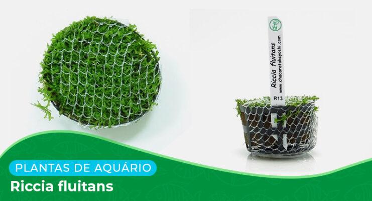 Ficha: Planta Riccia Fluitans