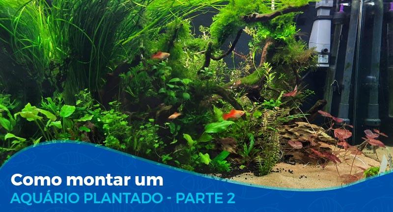 Como montar um aquário plantado - Parte 2/2