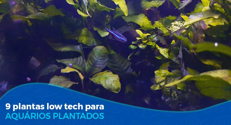 9 Plantas Low Tech para aquário plantado