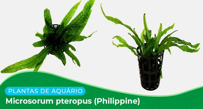 Ficha: Planta Microsorum Pteropus (Philippine)