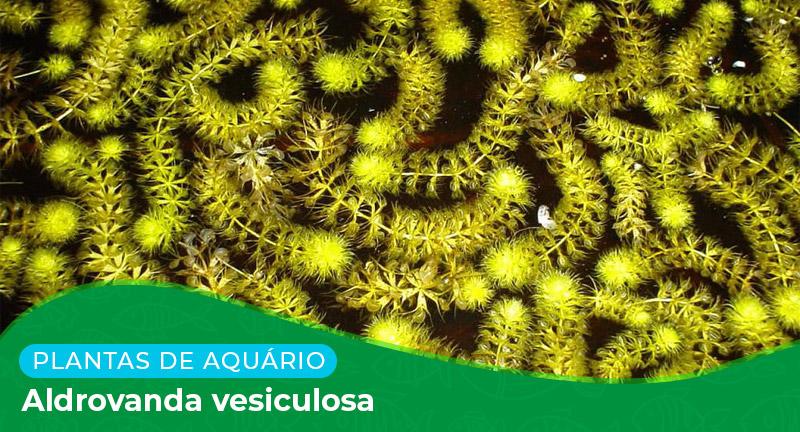 Ficha: Planta Aldrovanda Vesiculosa