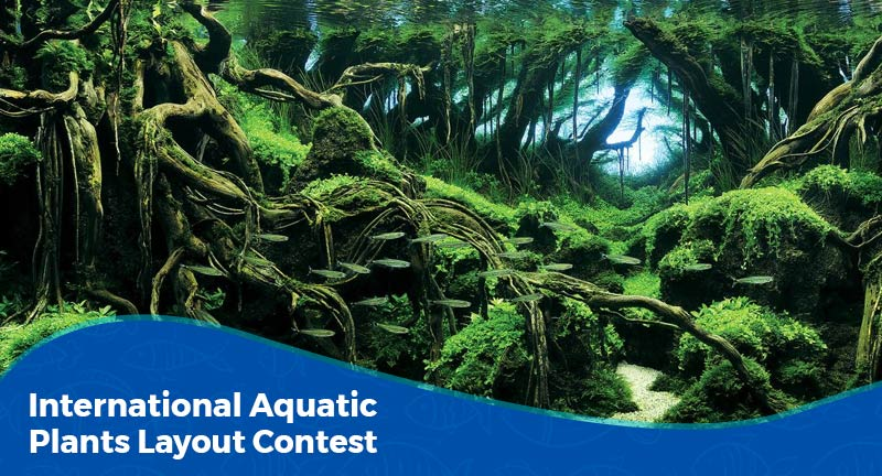 Tudo sobre o IAPLC (Aquatic Plants Layout Contest)