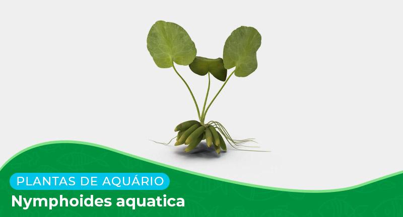 Ficha: Planta Nymphoides Aquatica