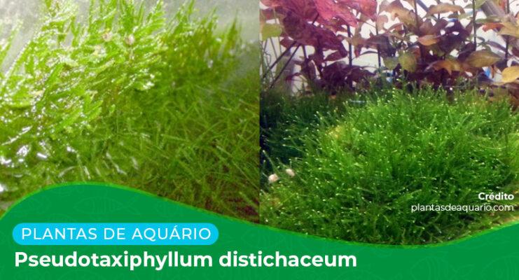 Ficha: Planta Pseudotaxiphyllum Distichaceum