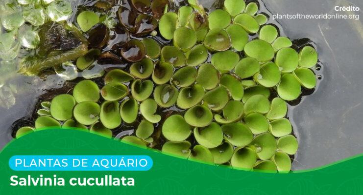 Ficha: Planta Salvinia Cucullata