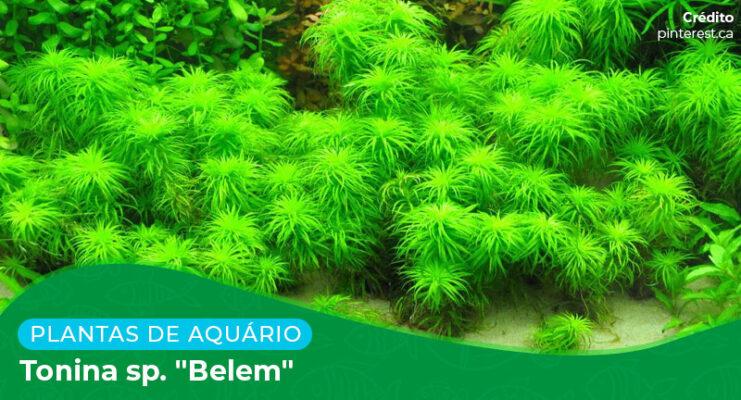 """Ficha: Planta Tonina sp. """"Belem"""""""