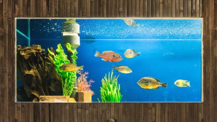 Quais são os tipos de aquário de água doce? - Parte 2/3
