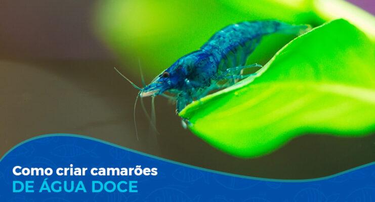 Curso de Criação de Camarão Caridina e Neocaridina