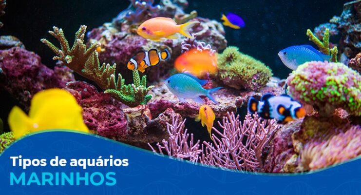 Quais são os principais tipos de aquário marinho?
