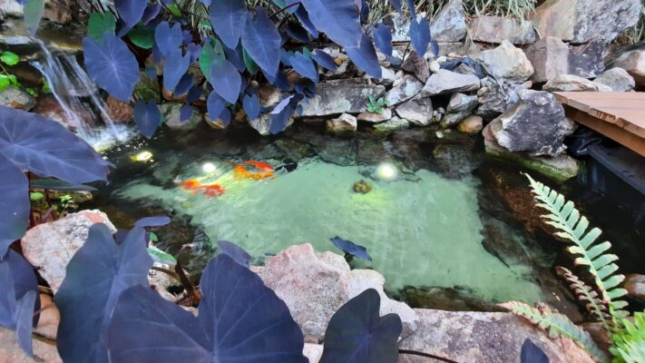 Como montar um lago ornamental - Parte 2/3