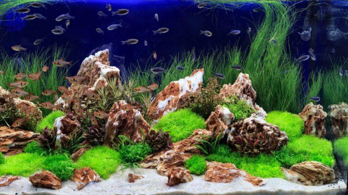 Como cuidar de um aquário de água doce