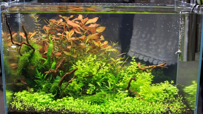 Como Cuidar das Plantas em um Aquário